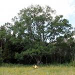 2011-07-27 Loodusmatk